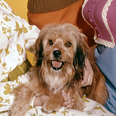 Dogs Name On Petticoat Junction